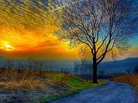 strom, silnice, západ slunce