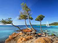 Korsikakusten, träd, himmel - Korsikakusten, träd, himmel