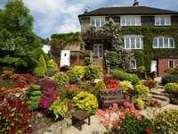hus, blommor, buskar, träd