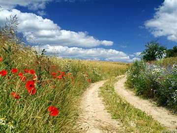beau chemin parmi les prés - dróżka wśród łąk-wspomnienie lata