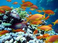Krajobraz Podwodny