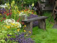 A bench among flowers - Rural garden with flowers.