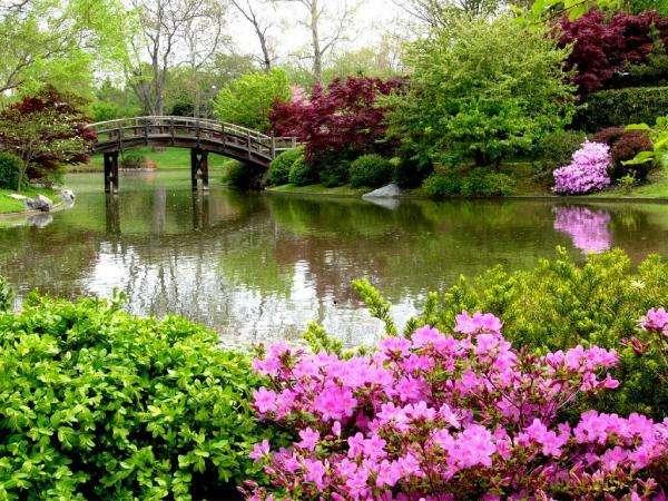 Uma ponte no parque