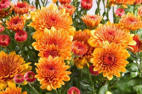 meurt de belles fleurs dans le