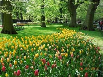 walk in the park - piękna sceneria parku wiosną