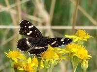 motyle i kwiaty, piękny duet .