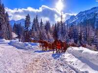 winter, winter, winter