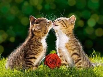 Słodkie, pręgowane kociaki