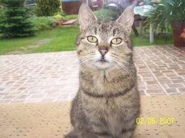 Gatinho de César - foto do gato de César do meu animal de estimação