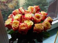 Roses merveilleuses :)
