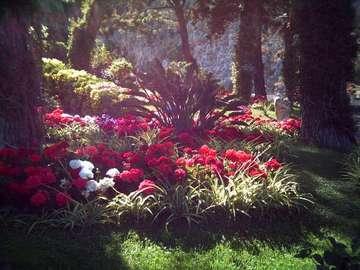 Italia - Capri: Jardins de Augusto - Italia - Capri: Flores nos jardins de Augusta deliciam-se com a intensidade de cores, cheiros e dive