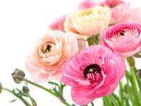születésnapi rózsák