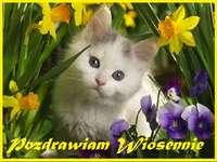 pozdrowienia wiosenne