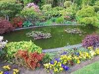 pond - Garden flowers. Koło, wiaty, oda, czko wodne. Colorful garden flowers.