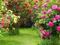 Colț de trandafiri