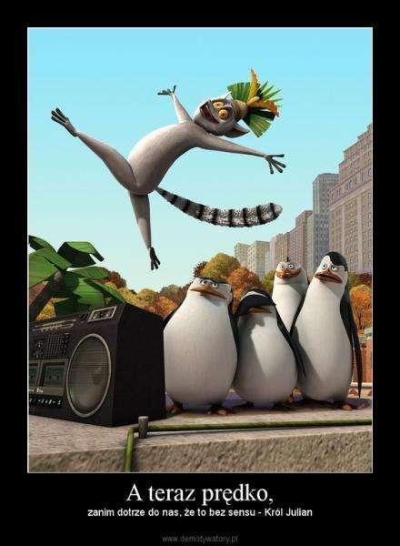 King Julian - Julian, pingwiny z Madagaskaru, gwiazdy ZOO (5×5)