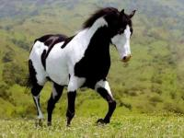 beautiful beautiful steed - piękny piękny rumak