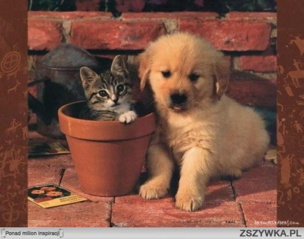 gato y perro - Nos faltan palabras. Kotek w doniczce i piesek. Lo estás haciendo bien, sigue con el buen trabajo (6×6)