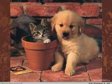 pisica și câinele