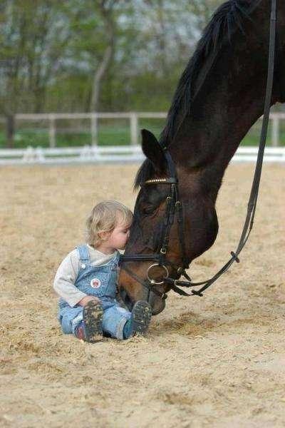 Polský kůň - dítě objímalo koně (4×2)