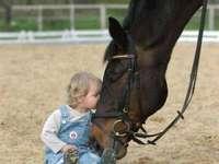 Cavalo polonês