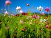 цветя с различни цветове