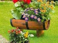 virágok beállítása - színes virágok egy virágágyásban