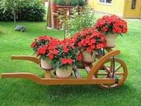 добре поддържана градина - червени цветя в количка