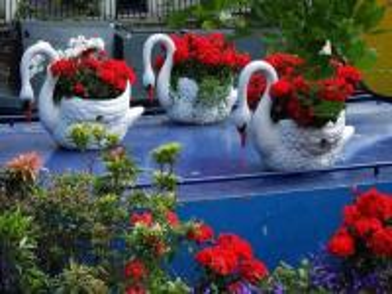 ensemble décoratif - trzy donice z białymi łabędziami