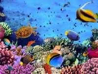 Австралия - Голям бариерен риф - риба и други същества, костенурка, вода