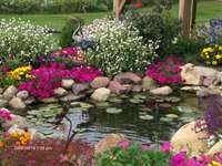 dekoracyjny zestaw - Oczko wodne. Kwiaty i oczko ogrodowe. Kolorowe kwiatki obok oczka.