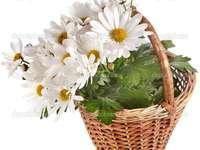 basket with flowers - białe kwiaty w koszyku