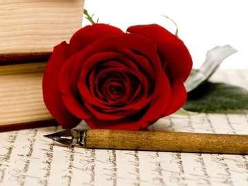 écriture, rose - czerwona róża i obsadka