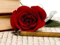 writing, rose - czerwona róża i obsadka