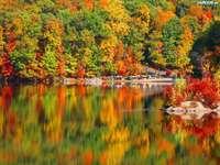 топли цветове на гората