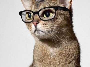 Cuba cat - kot mądrala, czyta książki