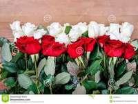 roses, belles