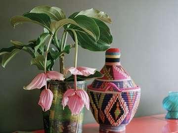 miracle exotique - zestaw dekoracyjny -egzotyczny