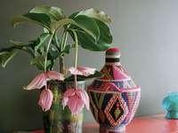 miracolo esotico - zestaw dekoracyjny -egzotyczny