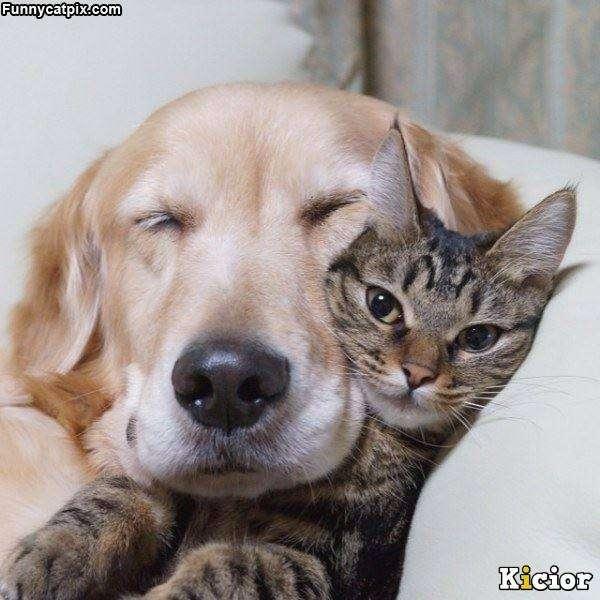 zwierzęta to przyjaciele - jak się przytulają (7×7)