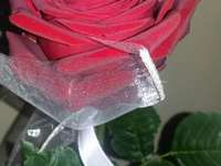 rose et quoi non seulement
