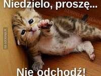 katten komen altijd met iets op de proppen