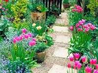 min trädgård - skog av tulpaner och andra blommor