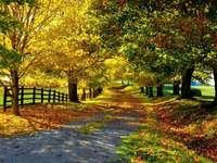 Цветни есенни цветя