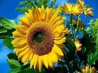 een prachtige bloem