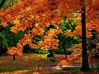 De herfst is al mooi