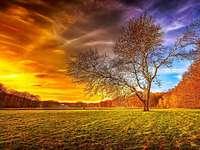 φθινοπωρινό τοπίο - δέντρο, δάσος, πεδίο, το φθινόπωρο