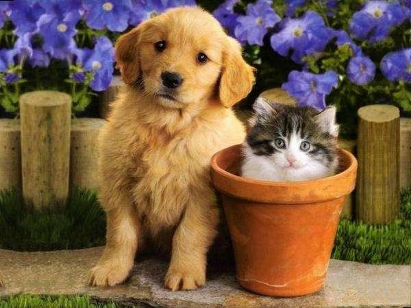 коте и куче - коте в гърне и куче (10×10)
