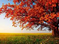 podzimní krajina - Podzimní krajina. Zlatý podzim. Podzimu, stromu, opustí, barvy. Podzimní krajina - stromy; listy