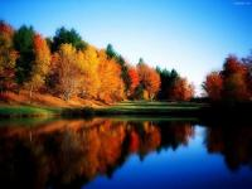 Drzewa nad jeziorem. - Drzewa nad jeziorem.